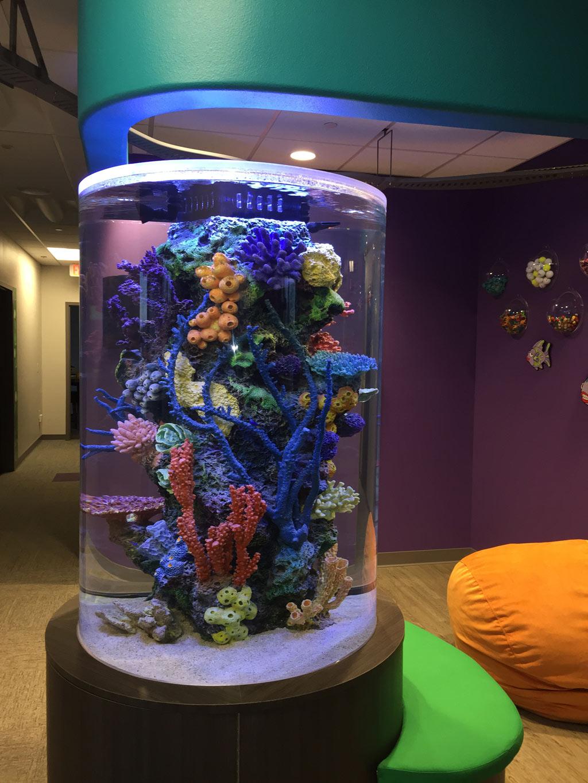 Freshwater aquarium fish milwaukee -  Fish Tank The Kids Dentist Mequon 0127
