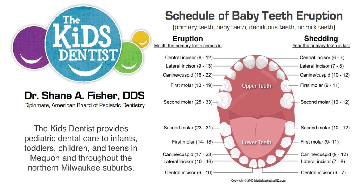 five stages of teething the kids dentist
